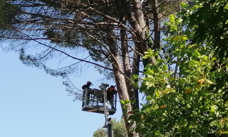 Parco Le Grazie, lavori in corso per la messa in sicurezza